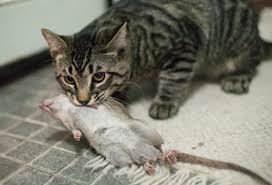 68-летний мужчина заболел опасной для жизни инфекцией. Заразился от кота! Неизвестная, но опасная.