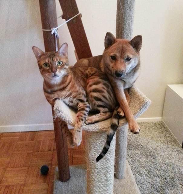 20 псов, которые упорно считают себя кошками, несмотря ни на что