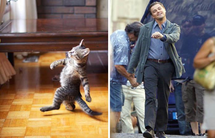 15 котов, похожих на кого угодно, только не на самих себя