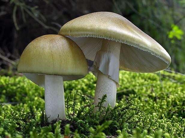 Малыш только дотронулся до ядовитого гриба — и его еле откачали! Опасный сезон в разгаре.