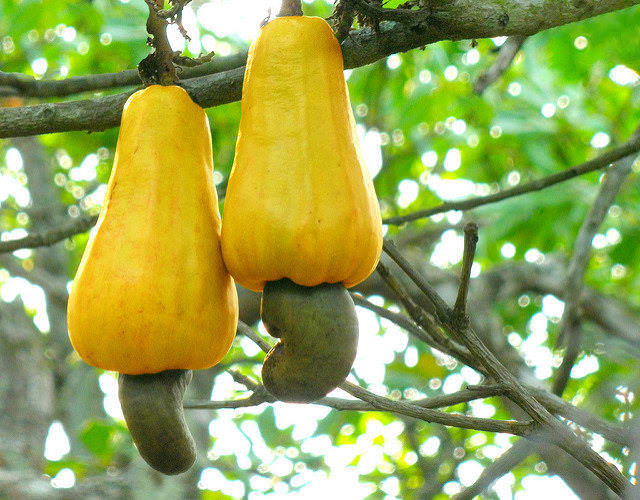 17 фото, которые полностью изменят ваше восприятие еды А ведь в детстве мы думали, что ананасы растут на деревьях…