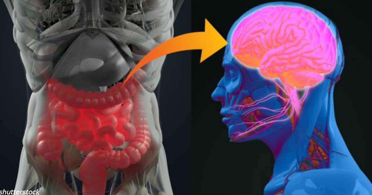 Болезнь Паркинсона может начинаться в кишечнике А точнее - в аппендиксе.