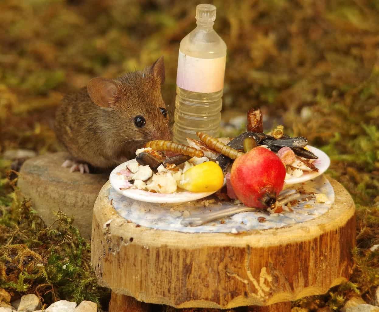 Мужик нашел в саду семью мышей. И построил им ?деревню?! Фотосессия тоже удалась!